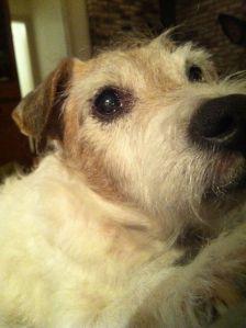 Milo Heart Dog