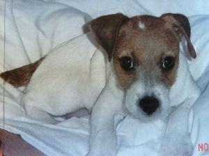 Milo Puppy 4 mos 2002